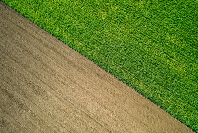 Techniki na ochronę zbóż ozimych